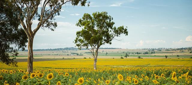 The Australian seasons are a joy for the eyes and the mind. Visa-Australian.com